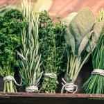 Natural fly flies maggots repellent herbs plants