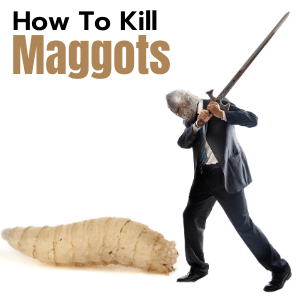 How to kill maggots